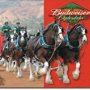 Budweiser – Clydesdales